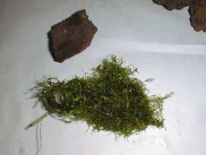 roche et plantes
